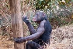 Chimp Eden