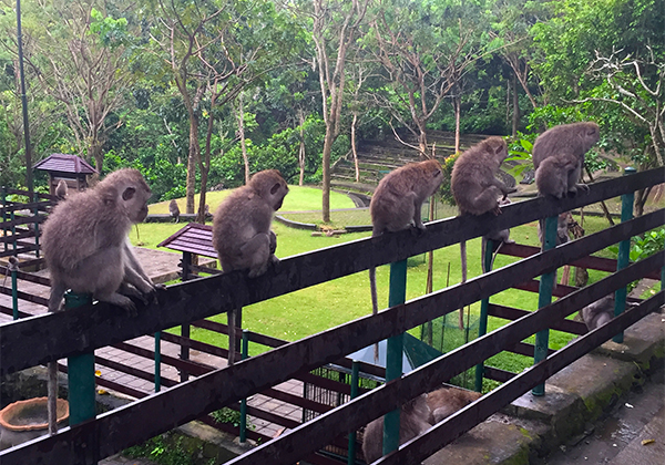 Monkey Forest
