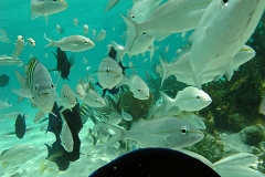 plongée iles caymans