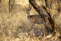 un monde de voyages Inde Ranthambore Safari