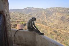 un monde de voyages Inde singe