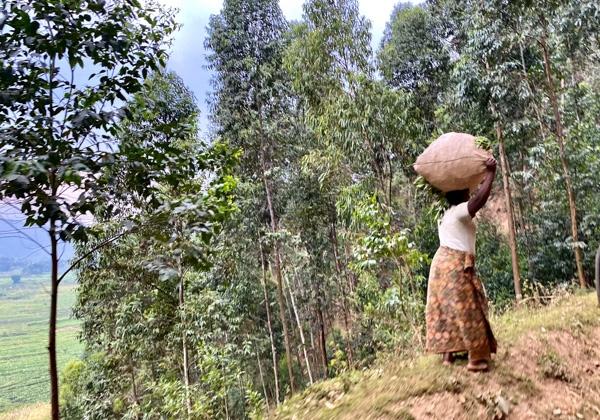 uganda14
