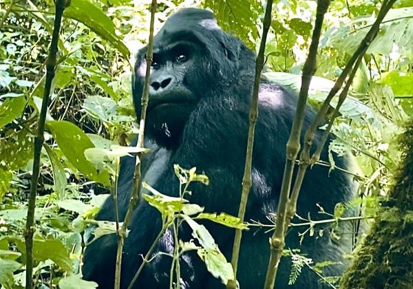 uganda33