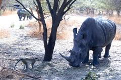 Safari Bandia