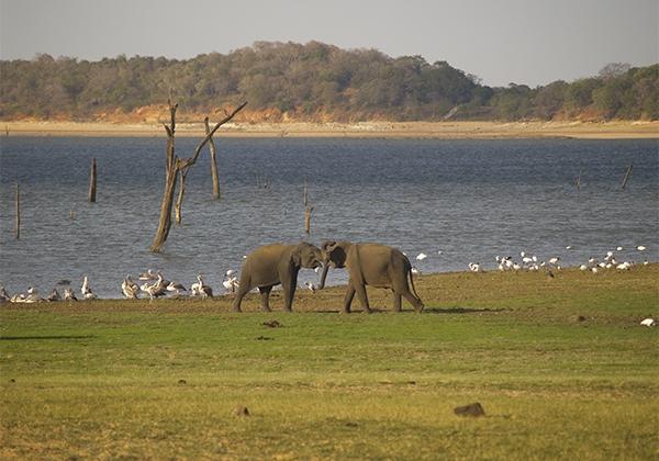 Sri_Lanka_015
