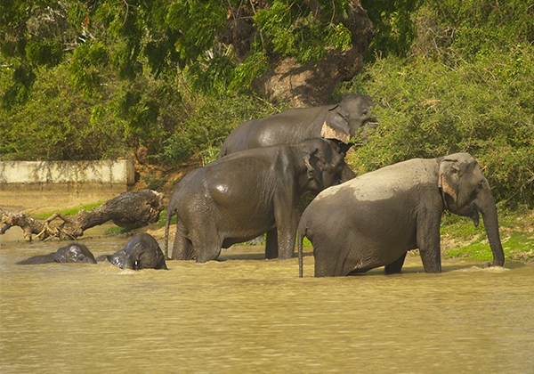 Sri_Lanka_023