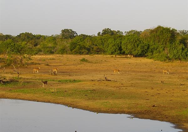 Sri_Lanka_038