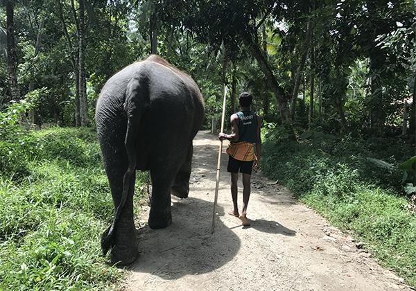 Sri_Lanka_058