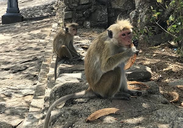 Sri_Lanka_097
