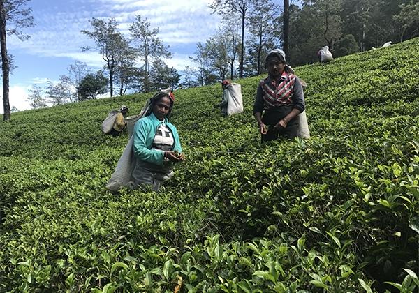 Sri_Lanka_135