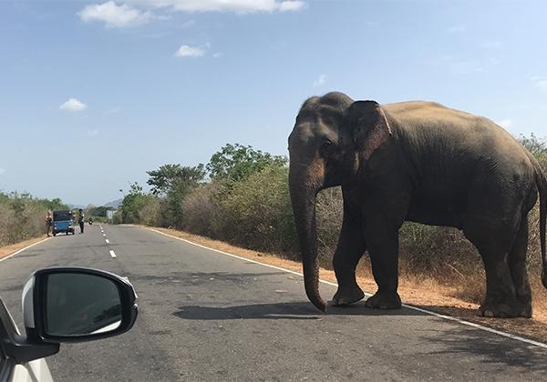 Sri_Lanka_167