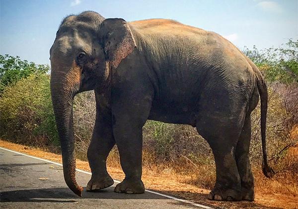 Sri_Lanka_168
