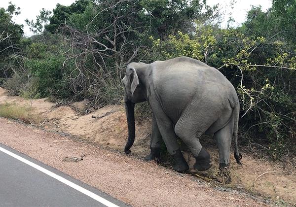 Sri_Lanka_185
