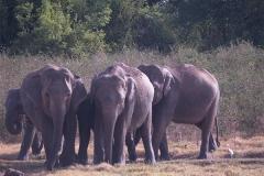 Sri_Lanka_012