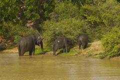 Sri_Lanka_024