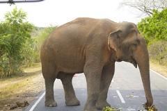 Sri_Lanka_028
