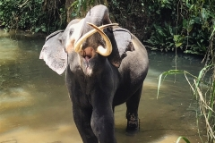 Sri_Lanka_060
