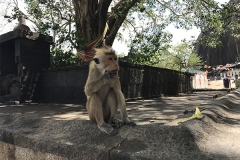 Sri_Lanka_083