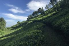 Sri_Lanka_129