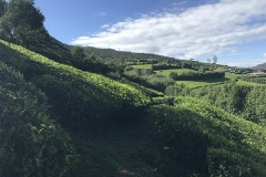 Sri_Lanka_130