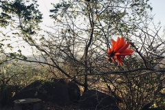 Swaziland-06