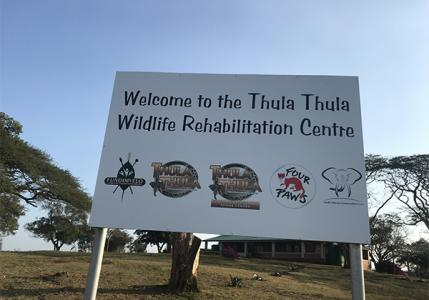 thula thula  15